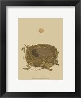 Framed Antique Nest Egg I