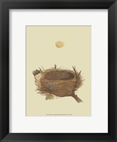 Framed Antique Nest Egg II