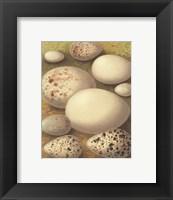 Framed Bird Egg Collection III