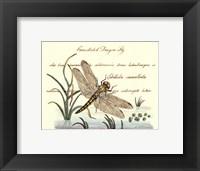 Framed Antique Dragonfly I