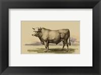Framed Antique Cow I
