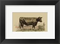 Framed Antique Cow II