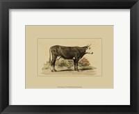 Framed Antique Cow IV