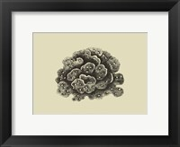 Framed Coral On Khaki I