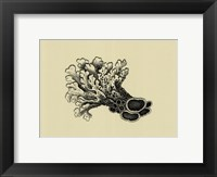 Coral On Khaki II Framed Print