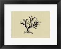 Coral On Khaki IV Framed Print