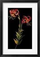 Framed Exotic Beauty II