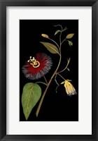 Framed Exotic Beauty III
