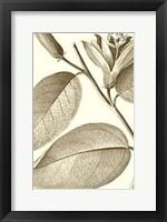 Framed Cropped Sepia Botanical II
