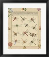 Framed Dragonfly Manuscript I