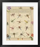 Framed Dragonfly Manuscript II