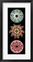Framed Kaleidoscope Anemone I