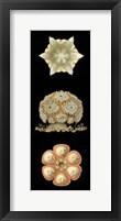 Framed Kaleidoscope Anemone III