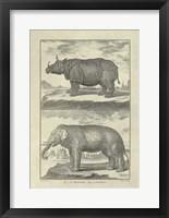 Framed Elephant Rhino