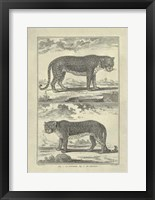 Framed Panther Leopard