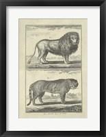 Framed Lion Tiger
