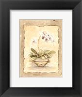 Framed Orchid Sanderiana