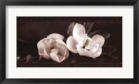 Framed Soft Magnolias I