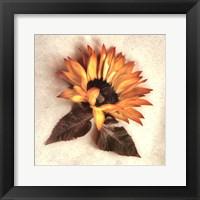 Framed Sand Sunflower