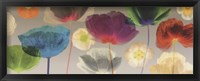 Framed Poppy Panorama