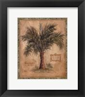 Palm Carpoxylon Framed Print