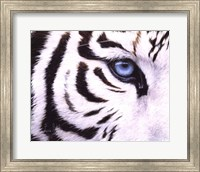 Framed Blue Eye