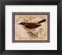 British Birds II Framed Print