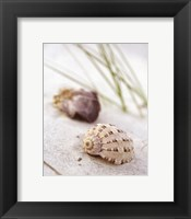 Sandy Beach IV Framed Print