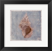 Framed Shells II Framed Print