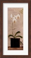 Framed Asian Orchid II