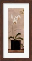 Framed Asian Orchid II