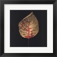 Smokebush Framed Print