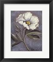 White Poppy Framed Print