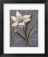 Framed White Lilly