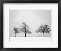 Silhouettes Of Winter II Framed Print