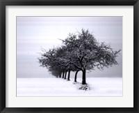 Winter Tree Line I Framed Print