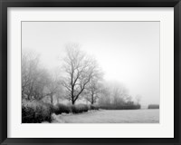 Framed Misty Tree-Lined Field