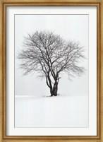 Framed Silhouette