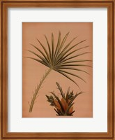 Framed Palm Frond I