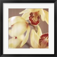 Framed Cymbidium Flow II