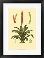 Framed Tropical Tillandsia