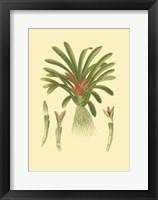 Framed Tropical Karatas