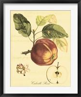 Framed Petite Tuscan Fruits I