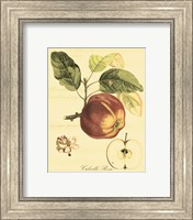 Framed Petite Tuscan Fruits I