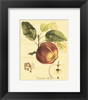 Petite Tuscan Fruits I Framed Print