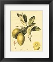 Framed Petite Tuscan Fruits II