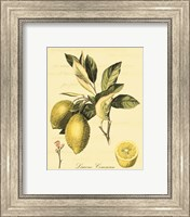 Framed Petite Tuscan Fruits II