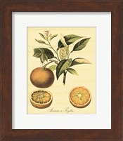 Framed Petite Tuscan Fruits III