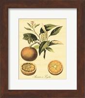 Framed Petite Tuscan Fruits III