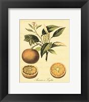 Petite Tuscan Fruits III Framed Print